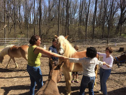 Equine Assisted Therapy | vR Growth and Learning Center